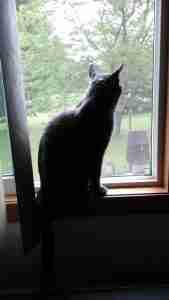 Diggy in the window