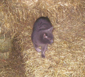 Diggy in our barn