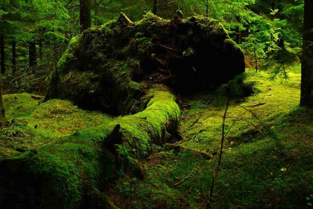 Mossy forest.